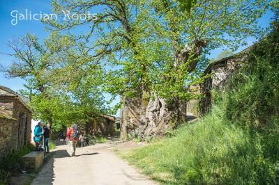 Triacastela Camiño de Santiago