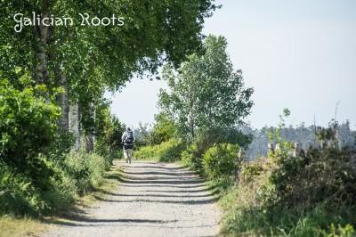 El Camino de Santiago en solitario