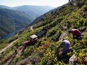 Excursión á Ribeira Sacra