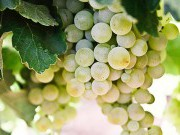Ruta del vino do Ribeiro