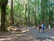 El Camino de Santiago organizado con Galician Roots