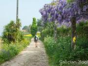 El Camino de Santiago Portugués con Galician Roots