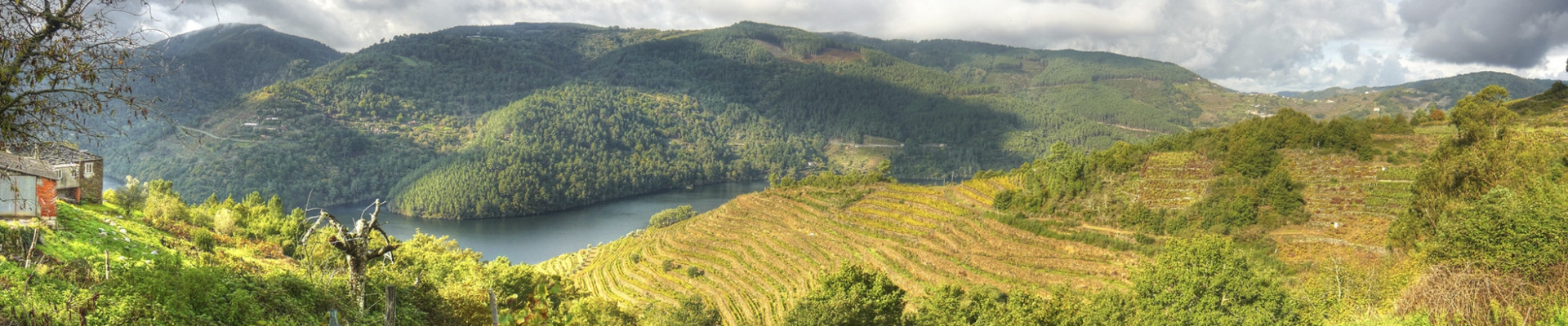 Full day trip in A Ribeira Sacra